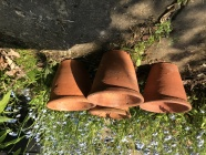 View categories and products within Vintage Terracotta pots