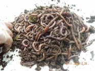 View categories and products within Worms for soil improvement