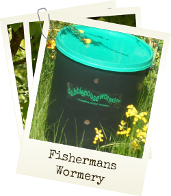 Fishermans Wormery - continous supply of fresh worms for fishing