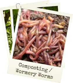 View our composting / wormery worms
