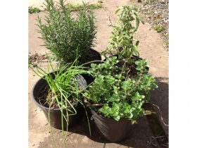 4 x 2 litre tubs organically grown herbs